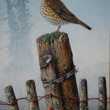 Song Thrush – Derek Golledge