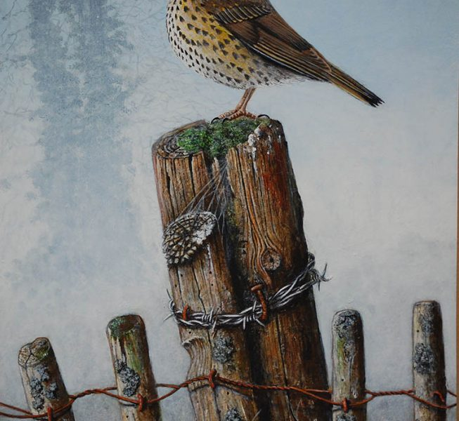 Song Thrush - Derek Golledge