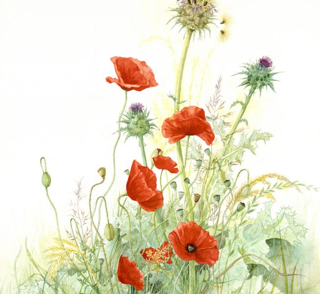 Poppies and Thistles II - Jill Coombs