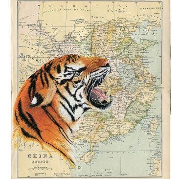 Chinese Tiger - Tracie Callaghan